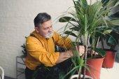 Fotografie bearded senior male gardener planting green plants at home