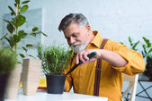 Fotografie smiling senior man planting green plant in pot at home