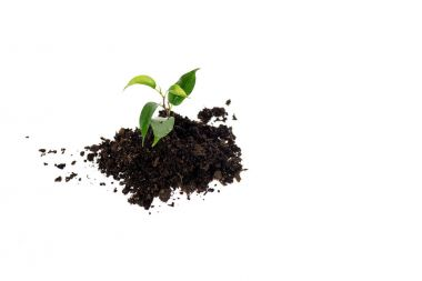 heap of ground with small green plant isolated on white