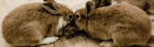 panoramic shot of cute and fluffy rabbits sitting near hay