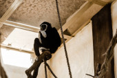 Photo selective focus of cute chimpanzee sitting near rope