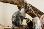 selective focus of cute monkey sitting on tree