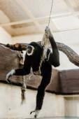 szelektív fókusz aranyos majom holding kötél és lengő állatkertben