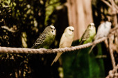 selective focus of parrots sitting on rope in zoo
