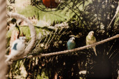 Fotografie selective focus of parrots sitting on rope in zoo