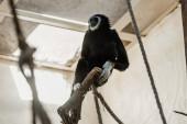 selektivní zaměření lan v blízkosti roztomilé opice v zoo