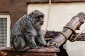 selective focus of monkey holding sweet cookie in zoo