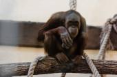 aranyos majom ül közel kötelek fán