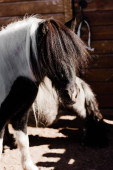 selective focus of black pony horse in zoo