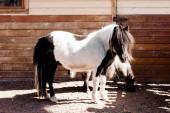 Fotografie Pony koně stojí u dřevěného plotu