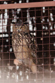 selective focus of owl sitting near cage in zoo