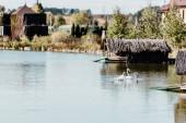 rózsaszín flamingók úszó tó közelében épületek és fák