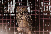 selective focus of owl sitting near metallic cage in zoo