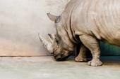 Photo rhinoceros standing near wall in zoo