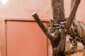 szelektív fókusz leopárd álló fa mellett az állatkertben