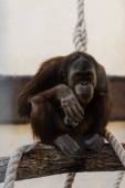 selektiver Fokus von Affen, die in der Nähe von Seilen auf einem Baum sitzen