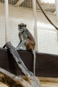 selective focus of cute monkey sitting near cage