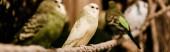 panoramatický záběr papoušků sedících na kovové kleci v zoo