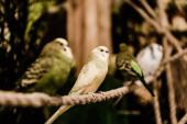 messa a fuoco selettiva dei pappagalli seduti sulla gabbia metallica nello zoo