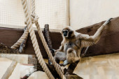 selective focus of monkey sitting on wooden log near ropes