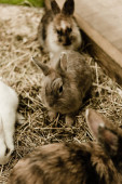 selective focus of cute and small rabbits sitting near hay
