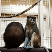 selective focus of cute monkeys sitting on wooden log near rope and cage