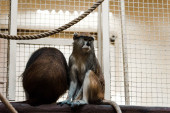 selective focus of monkeys sitting on wooden log near rope and cage