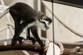 szelektív fókusz aranyos majom közel kötelek ül fa rönk