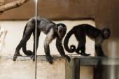 messa a fuoco selettiva di scimmie adorabili nello zoo