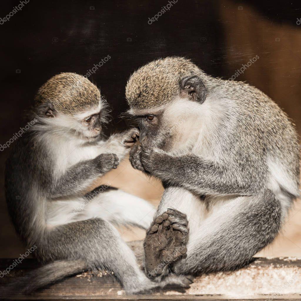 Cute monkeys sitting in zoo stock vector