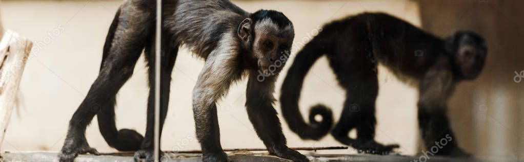 Panoramic shot of adorable monkeys in zoo stock vector