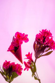 květiny v sladké zmrzliny kužel izolované na růžové