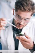 szelektív fókusz jóképű szakállas biokémikus gazdaság pipetta üveghez közel növény és őrölt