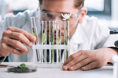 selective focus of biochemist in goggles looking a test tubes with green plants near microscope