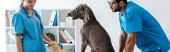 panoramic shot of two young veterinarians standing near weimaraner and pekinese dogs sitting on table