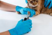 Fényképek részleges kilátás állatorvos gazdaság piros macska közben kolléga vágás karmok