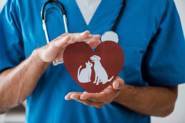Partial view of veterinarian showing paper cut heart with dog and cat symbols, panoramic shot stock vector