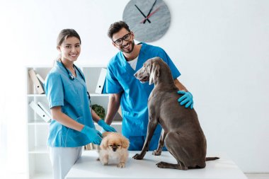 two young, cheerful veterinarians smiling at camera while standing near table with pekinese and weimaraner dogs