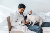 smiling bi-racial businessman feeding Jack Russell Terrier in morning at home