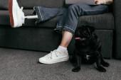 Oříznutý pohled na psího psa sedícího u ženy s protetickou nohou a laptopem na gauči