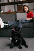 Selektiver Fokus des lustigen Mops, der neben einer Frau mit Beinprothese und Laptop auf dem Sofa sitzt