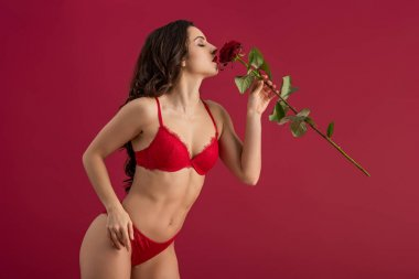 Sensual girl in lingerie enjoying flavor of red rose while standing isolated on red stock vector
