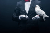 Photo cropped view of magician holding dove and wand isolated on black