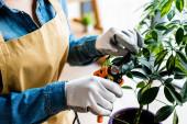 levágott kilátás nő kesztyűben vágás zöld levelek kertészeti ollóval