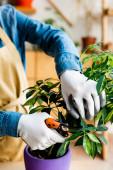 abgeschnittene Ansicht einer jungen Frau in Handschuhen, die mit der Gartenschere grüne Blätter schneidet