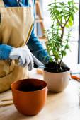 oříznutý pohled zahradníka v rukavicích držících malou lopatu se zemí při transplantaci rostliny