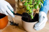 stříhaná z ženy v rukavicích, držící lopatu se zemí při transplantaci rostliny se zelenými listy
