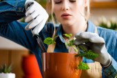 Selektiver Fokus der jungen Frau in Handschuhen, die eine kleine Schaufel hält, während sie Pflanzen im Blumentopf pflanzt