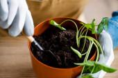 Ausgeschnittene Ansicht einer jungen Frau in Handschuhen, die eine kleine Schaufel mit Erde hält, während sie Pflanzen pflanzt