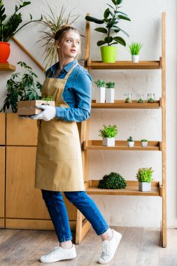attractive woman in gloves holding wooden box with green plants and looking away